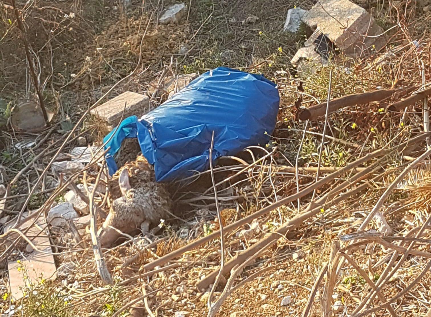 Bari, carogne abbandonate in campagna nei bustoni: a Ceglie il macabro giallo delle pecore - Il Quotidiano Italiano - Bari